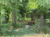 Židovský hřbitov ve Velké nad Veličkou (autor: Veronika Frňková)