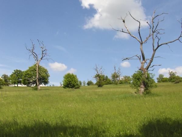přírodní rezervace Čertoryje (autor: Leila82)